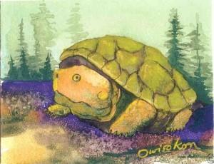 lahache-turtle